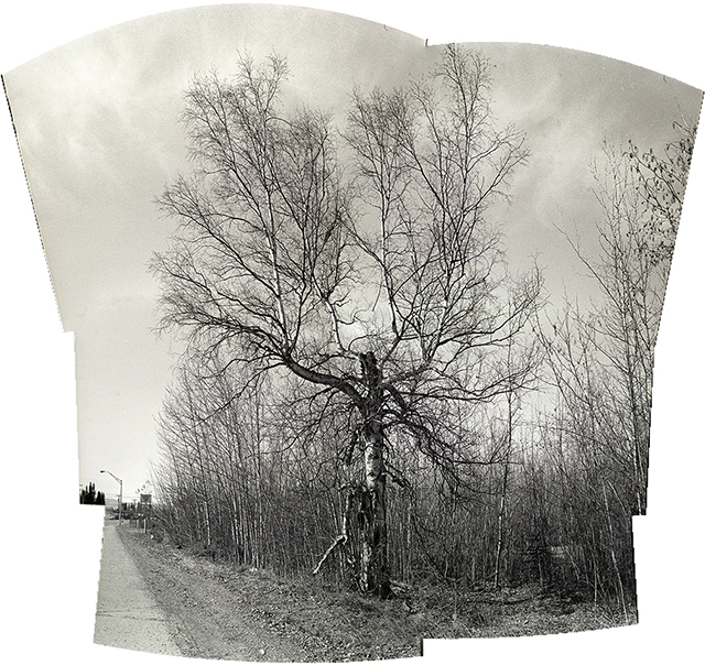 stitched black and white of tree